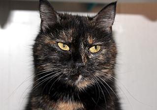 1500 X 1051 253.2 Kb Передержка для животных Пес Барбос отдает животных и принимает кошек на лето!