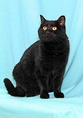 423 X 604 36.6 Kb Передержка для животных Пес Барбос отдает животных и принимает кошек на лето!