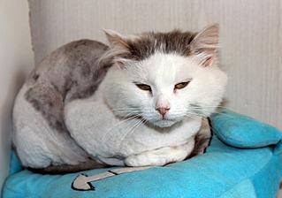 1500 X 1051 292.3 Kb Передержка для животных Пес Барбос отдает животных и принимает кошек на лето!