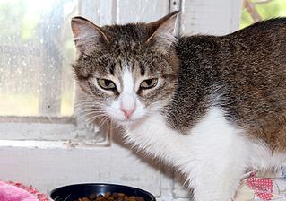 1500 X 1051 443.7 Kb 1500 X 1051 292.3 Kb Передержка для животных Пес Барбос отдает животных и принимает кошек на лето!