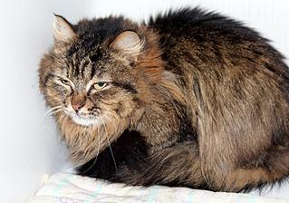 1500 X 1051 367.1 Kb 1500 X 1051 443.7 Kb 1500 X 1051 292.3 Kb Передержка для животных Пес Барбос отдает животных и принимает кошек на лето!
