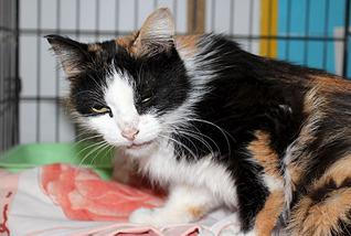 1795 X 1205 402.6 Kb Передержка для животных Пес Барбос отдает животных и принимает кошек на лето!