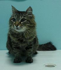 1073 X 1241 131.5 Kb Передержка для животных Пес Барбос отдает животных и принимает кошек на лето!