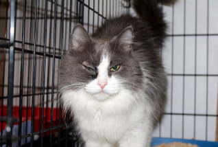 1795 X 1205 335.5 Kb Передержка для животных Пес Барбос отдает животных и принимает кошек на лето!