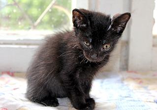 1500 X 1051 236.6 Kb Передержка для животных Пес Барбос отдает животных и принимает кошек на лето!