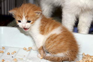 1795 X 1205 378.2 Kb 1500 X 1051 236.6 Kb Передержка для животных Пес Барбос отдает животных и принимает кошек на лето!