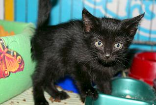 1795 X 1205 299.2 Kb Передержка для животных Пес Барбос отдает животных и принимает кошек на лето!