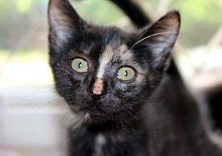 1500 X 1051 212.2 Kb 1500 X 1051 272.1 Kb 1500 X 1051 232.1 Kb 1795 X 1205 299.2 Kb Передержка для животных Пес Барбос отдает животных и принимает кошек на лето!