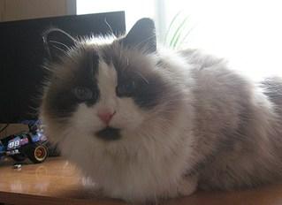 1920 X 1394 430.8 Kb Мишель, моя кошка