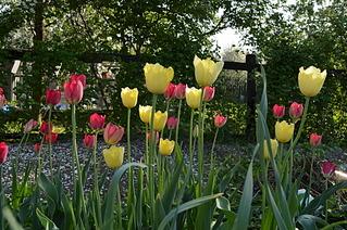 1920 X 1276 802.9 Kb Цветы