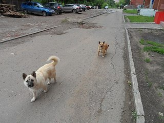 604 X 453 67.6 Kb Передержка для животных Пес Барбос отдает животных и принимает кошек на лето!