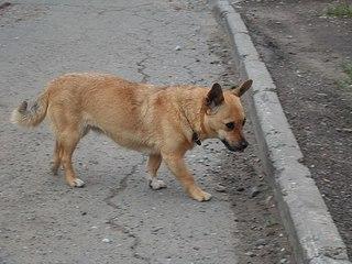 604 X 453 57.7 Kb 604 X 453 67.6 Kb Передержка для животных Пес Барбос отдает животных и принимает кошек на лето!