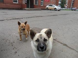 604 X 453 62.7 Kb 604 X 453 57.7 Kb 604 X 453 67.6 Kb Передержка для животных Пес Барбос отдает животных и принимает кошек на лето!