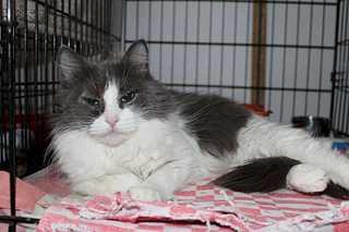 1920 X 1280 134.4 Kb Передержка для животных Пес Барбос отдает животных и принимает кошек на лето!