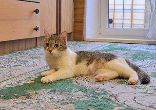 604 X 427 65.7 Kb Передержка для животных Пес Барбос отдает животных и принимает кошек на лето!