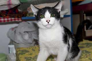1920 X 1280 102.7 Kb Передержка для животных Пес Барбос отдает животных и принимает кошек на лето!