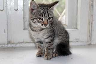 1920 X 1280 100.2 Kb Передержка для животных Пес Барбос отдает животных и принимает кошек на лето!