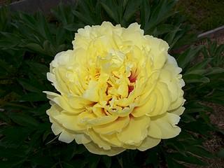 1920 X 1440 384.5 Kb Цветы