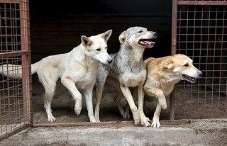 604 X 389 62.1 Kb 385 X 604 77.0 Kb Официальная тема приюта 'Кот и Пёс': наши питомцы ждут любой помощи! и свою семью!