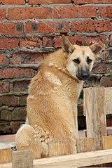 403 X 604 62.9 Kb 410 X 604 50.3 Kb Официальная тема приюта 'Кот и Пёс': наши питомцы ждут любой помощи! и свою семью!