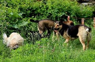 604 X 400 96.4 Kb 403 X 604 62.9 Kb 410 X 604 50.3 Kb Официальная тема приюта 'Кот и Пёс': наши питомцы ждут любой помощи! и свою семью!