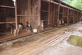 1920 X 1282 931.4 Kb Официальная тема приюта 'Кот и Пёс': наши питомцы ждут любой помощи! и свою семью!