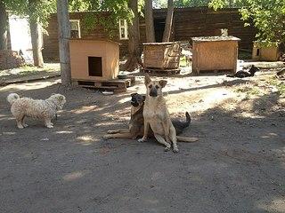 604 X 453 77.1 Kb Официальная тема приюта 'Кот и Пёс': наши питомцы ждут любой помощи! и свою семью!