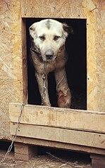 376 X 604 62.1 Kb 403 X 604 61.2 Kb Официальная тема приюта 'Кот и Пёс': наши питомцы ждут любой помощи! и свою семью!