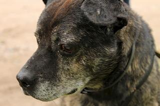 1920 X 1280 368.6 Kb Боря, сбитая собака, Авангардная, скорее всего не будет видеть