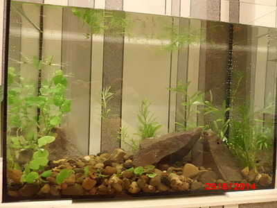 1920 X 1440 561.8 Kb Как запустить аквариум?