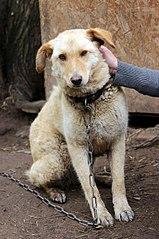 402 X 604 65.9 Kb Официальная тема приюта 'Кот и Пёс': наши питомцы ждут любой помощи! и свою семью!
