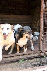 403 X 604 59.4 Kb Официальная тема приюта 'Кот и Пёс': наши питомцы ждут любой помощи! и свою семью!