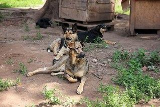 604 X 403 74.2 Kb 403 X 604 59.4 Kb Официальная тема приюта 'Кот и Пёс': наши питомцы ждут любой помощи! и свою семью!