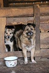 403 X 604 63.7 Kb 403 X 604 57.9 Kb 604 X 403 74.2 Kb 403 X 604 59.4 Kb Официальная тема приюта 'Кот и Пёс': наши питомцы ждут любой помощи! и свою семью!