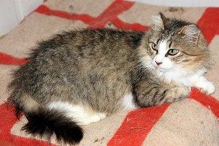 604 X 403 63.1 Kb 604 X 403 42.7 Kb Официальная тема приюта 'Кот и Пёс': наши питомцы ждут любой помощи! и свою семью!