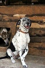 402 X 604 58.4 Kb Официальная тема приюта 'Кот и Пёс': наши питомцы ждут любой помощи! и свою семью!