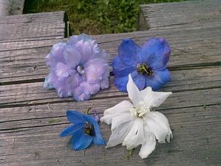 1920 X 1440 846.0 Kb Цветы