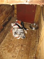 1920 X 2560 543.0 Kb Официальная тема приюта 'Кот и Пёс': наши питомцы ждут любой помощи! и свою семью!
