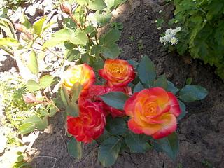1920 X 1440 988.2 Kb Цветы