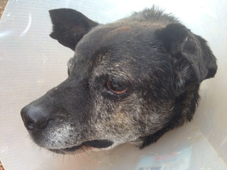 1632 X 1224 647.1 Kb Боря, сбитая собака, Авангардная, скорее всего не будет видеть
