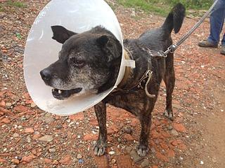 1632 X 1224 896.9 Kb 1632 X 1224 647.1 Kb Боря, сбитая собака, Авангардная, скорее всего не будет видеть