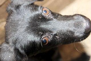 604 X 403 56.9 Kb 403 X 604 42.3 Kb Официальная тема приюта 'Кот и Пёс': наши питомцы ждут любой помощи! и свою семью!
