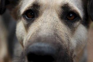 604 X 403 33.9 Kb Официальная тема приюта 'Кот и Пёс': наши питомцы ждут любой помощи! и свою семью!