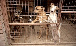 604 X 363 56.0 Kb 604 X 403 33.9 Kb Официальная тема приюта 'Кот и Пёс': наши питомцы ждут любой помощи! и свою семью!