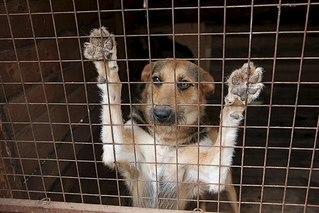 604 X 403 57.4 Kb 604 X 363 56.0 Kb 604 X 403 33.9 Kb Официальная тема приюта 'Кот и Пёс': наши питомцы ждут любой помощи! и свою семью!