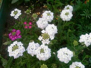 1920 X 1440 807.9 Kb Цветы