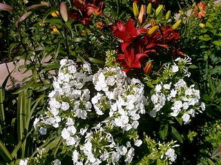 1920 X 1440 454.5 Kb Цветы
