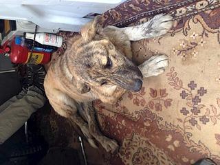 1920 X 1440 682.4 Kb Официальная тема приюта 'Кот и Пёс': наши питомцы ждут любой помощи! и свою семью!
