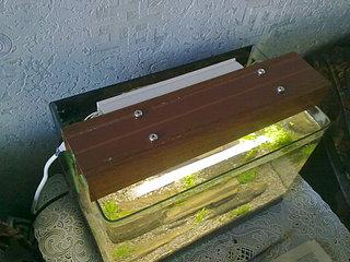 1920 X 1440 473.3 Kb DIY (сделай сам) в аквариуме.