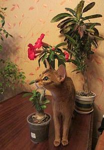 1294 X 1861 505.5 Kb Веточка для Коржиков.и абиссинских кошек
